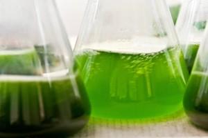 algae_biodiesel5