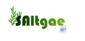 Saltgae-logo